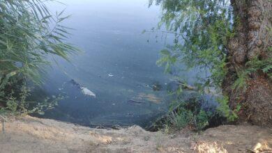 Photo of Adelante alerta de la existencia de peces muertos, malos olores y suciedad en los estanques del Parque Miraflores