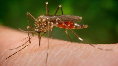 Photo of Preguntas sobre el virus del Nilo