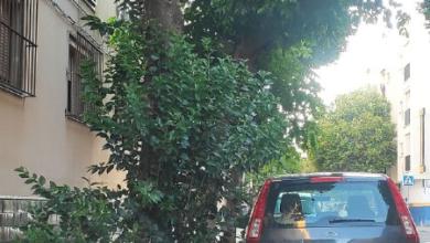 """Photo of Eva Oliva denuncia """"discriminación"""" por parte del Ayuntamiento en la limpieza, desbroce y podas de algunos barrios sevillanos"""